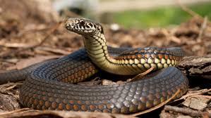 Mơ gặp rắn đánh con gì dễ trúng nhất - Giải mã giấc mơ gặp rắn