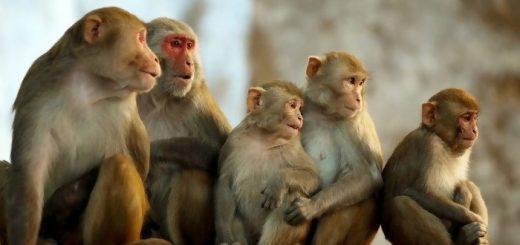 Mơ gặp khỉ đánh số gì cho dễ trúng? Giải mã giấc mơ gặp khỉ?
