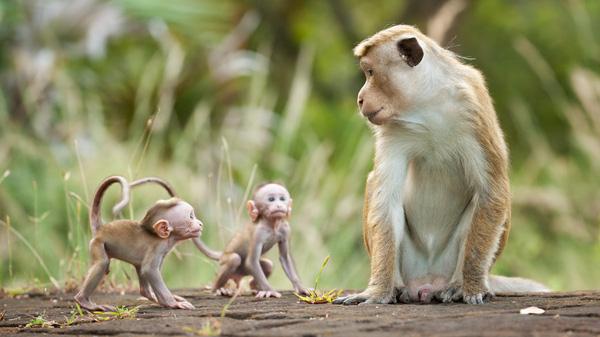 Giải mã giấc mơ gặp khỉ