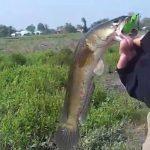 Giải mã giấc mơ: Mơ thấy bắt cá lóc là điềm tốt hay xấu?